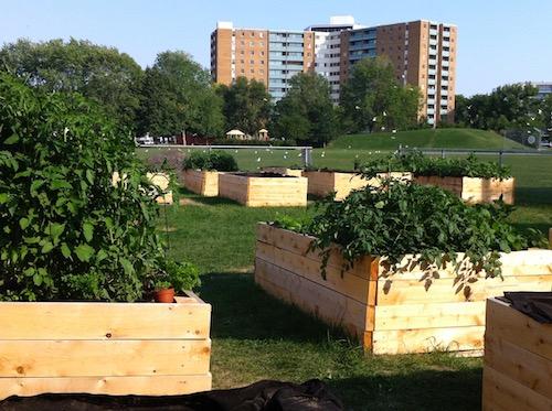 Community Gardening Network