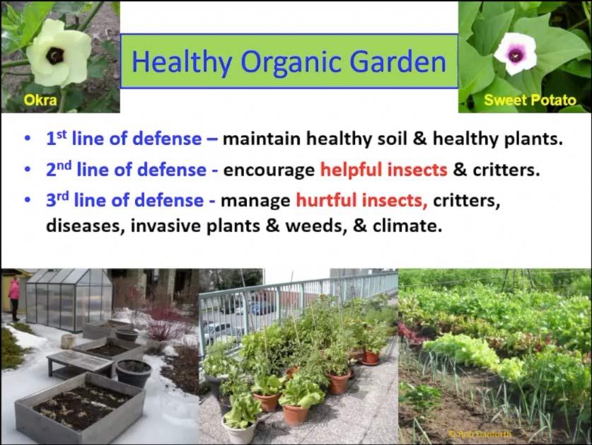 Rob Danforth healthy organic garden video workshop